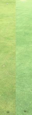 FLOATER Golf Ball 5 Wood
